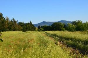 vue colline coquelicot